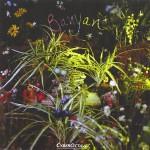 Banyan Cover